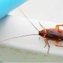 Μόνο κατσαρίδες δεν βρήκαν στο εστιατόριο της Μυκόνου πoυ χρέωσε 836 ΕΥΡΩ τα καλαμαράκια. Τι γράφουν οι επισκέπτες, αναλυτικά